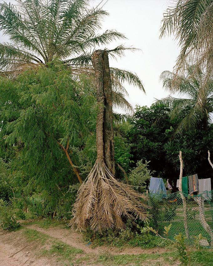 Paris Photo: The Depressive Palm Tree