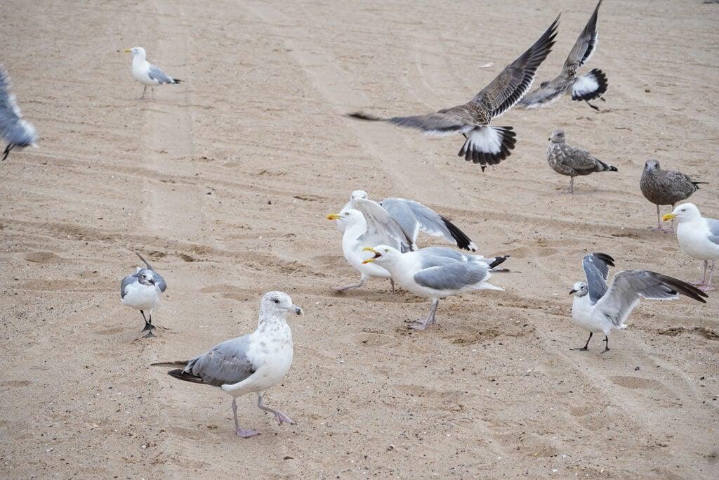seagulls on sandy beach
