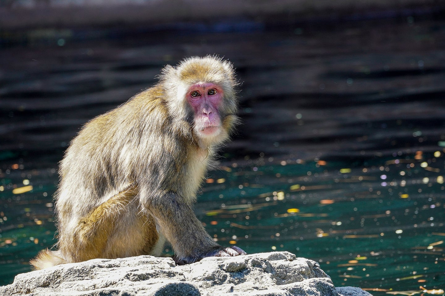 monkey by the water