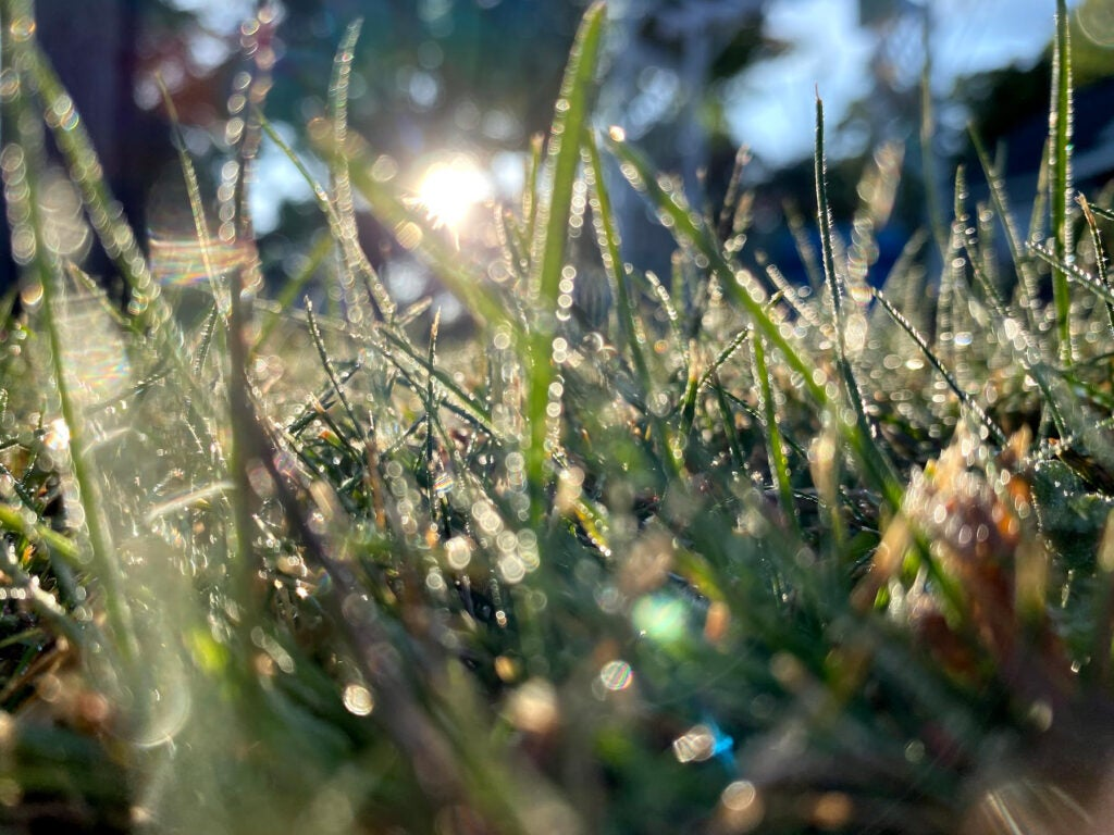 A lens flare on dewy grass