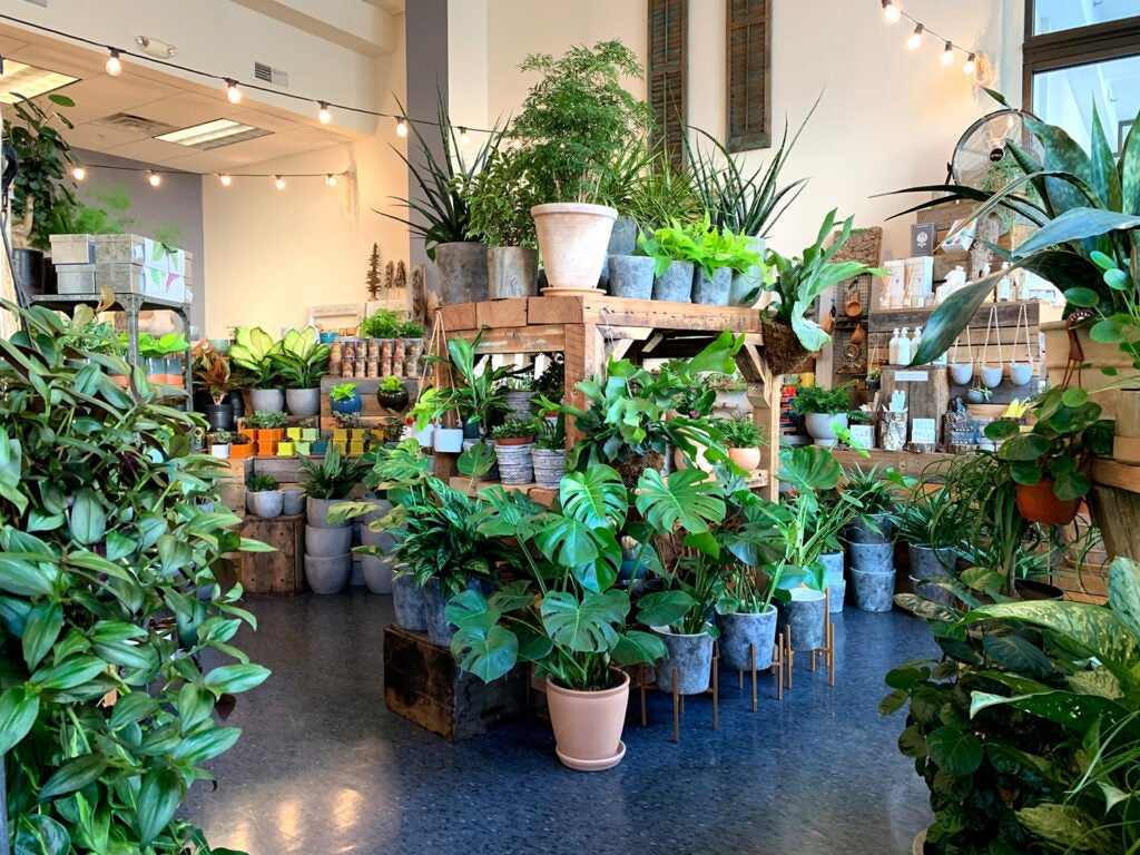 Green potted plants in a store
