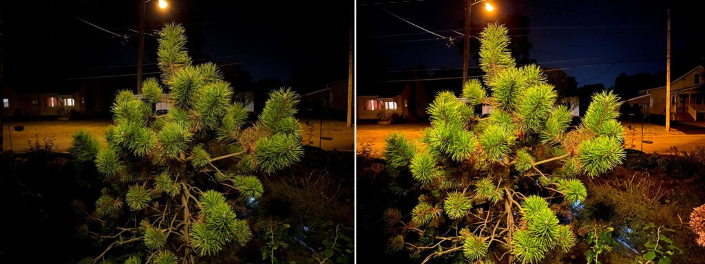 A bush without and with Night Mode