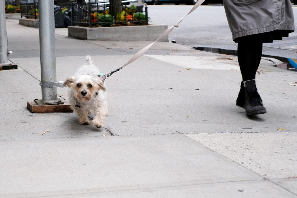 small dog on a leash