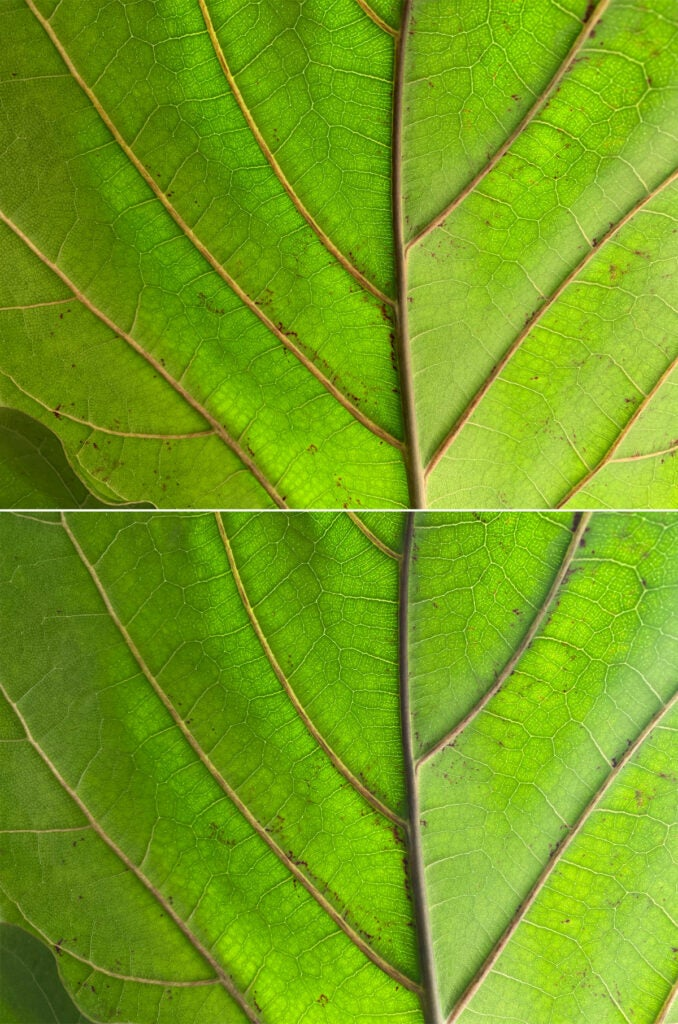 Deep Fusion Leaf Comparison
