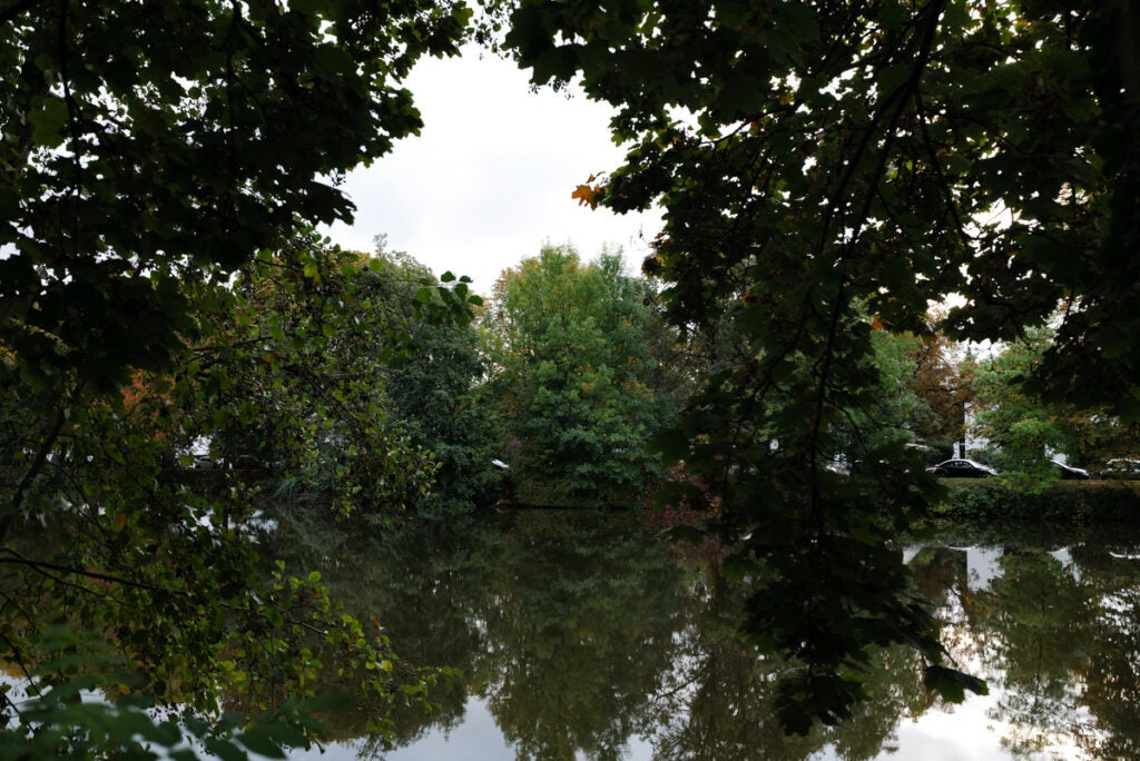 reflection of trees on the water
