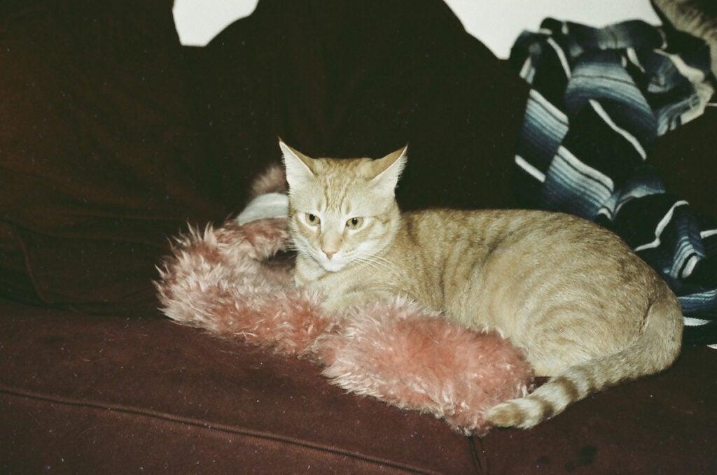 orange cat on fluffy pink blanket
