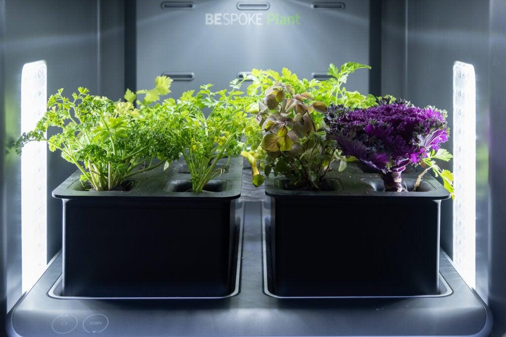 Samsung Bespoke Plants