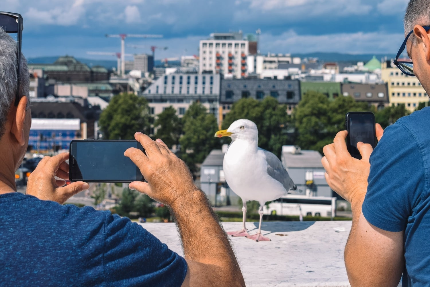 Two tourists using their phones to photograph a gull in front of a city skyline