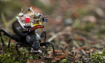 Scientists strapped tiny cameras to beetles to get a bug's-eye view of the world