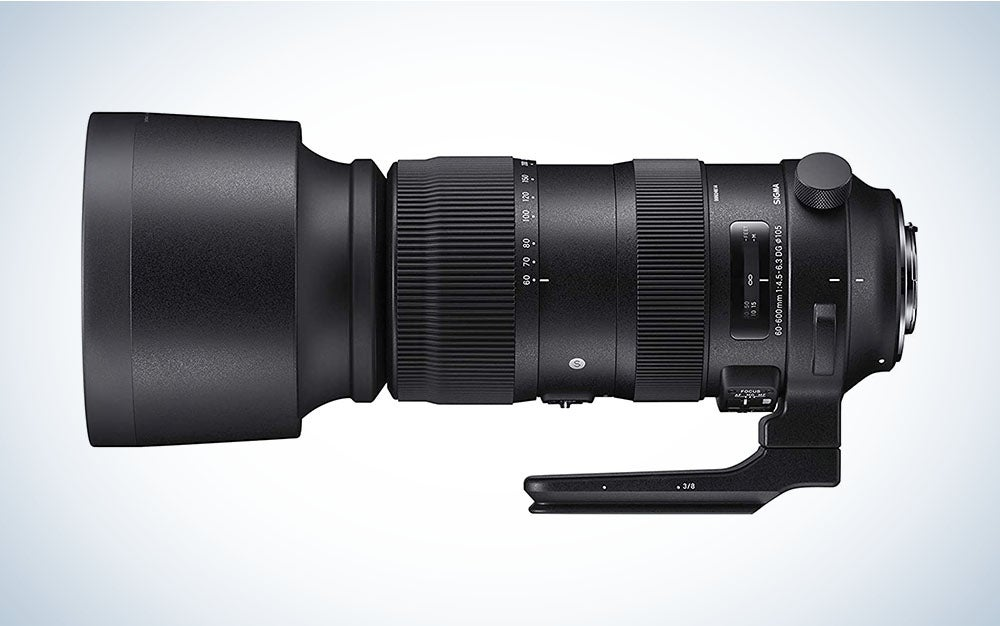 The Sigma 60-600mm f:4.5-6.3 is the best super telephoto lens for wildlife photographers.