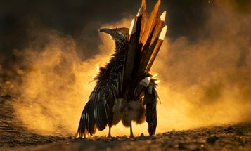 Check out these incredible images from the 2021 Audubon Photography Awards