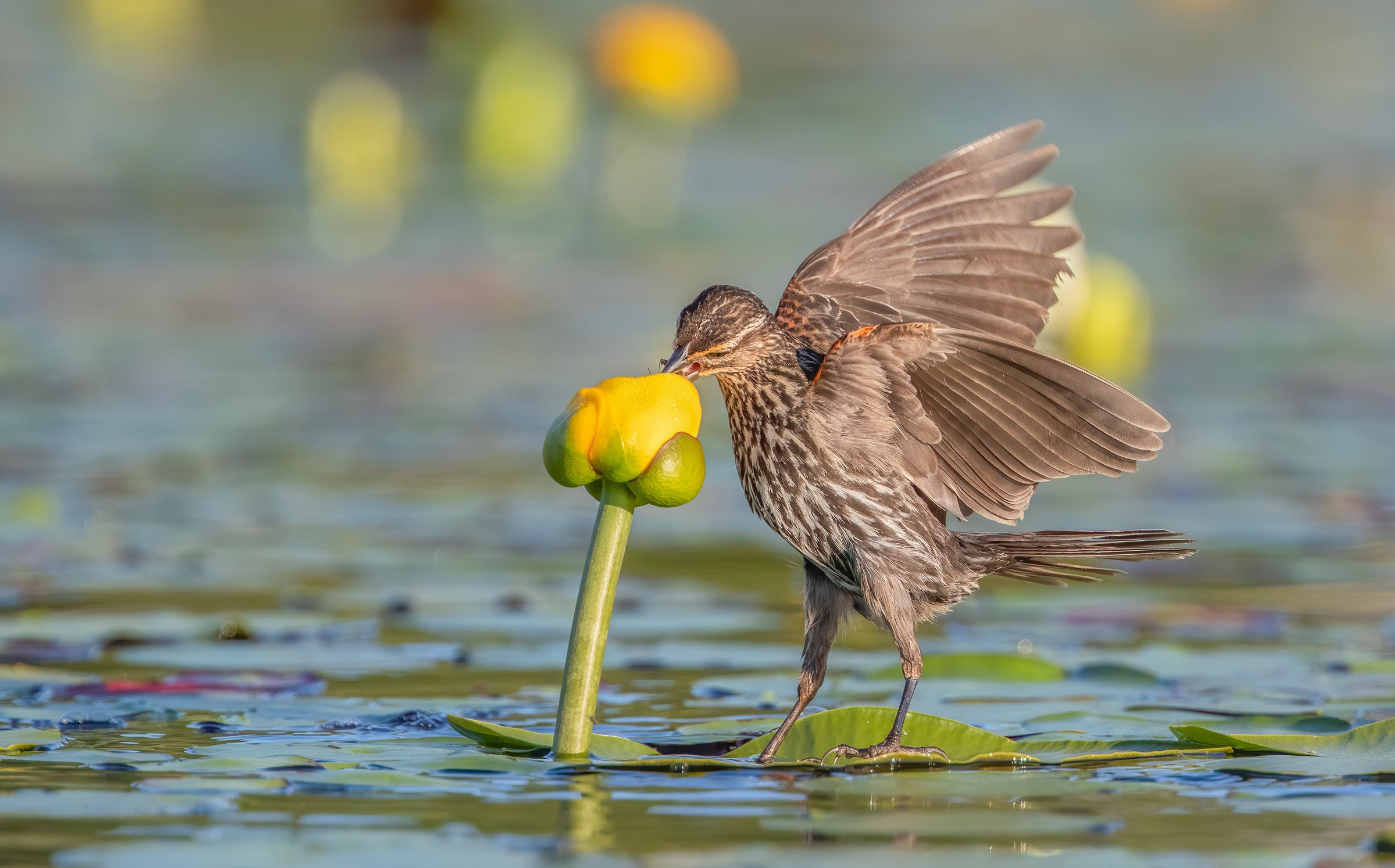 bird eating out of a flower over water