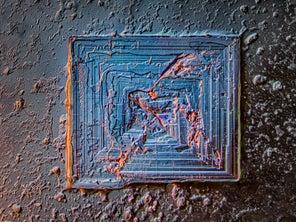 15 mesmerizing photos of the microscopic world