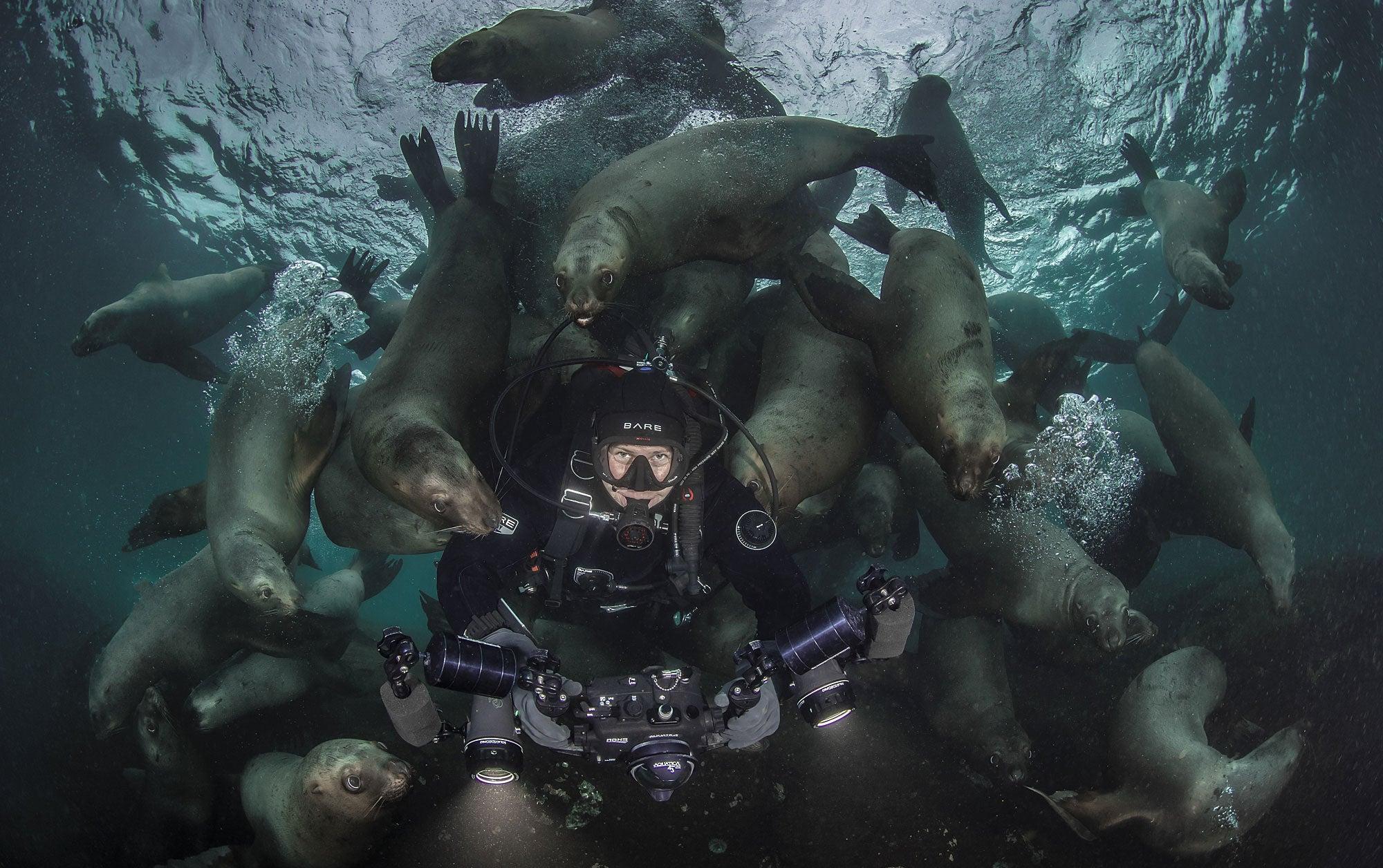 Sea lions swarm a diver