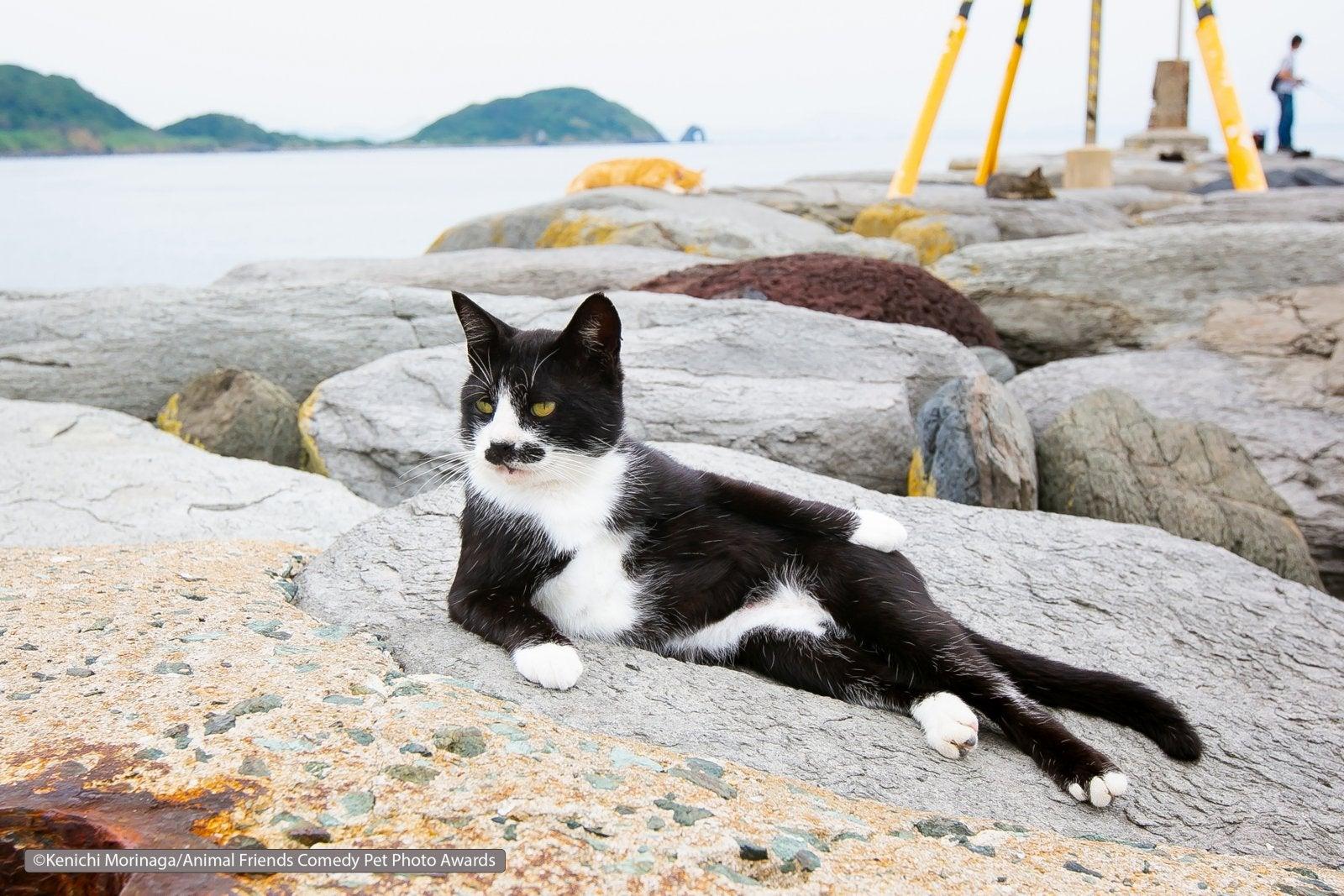 Kenichi Morinaga/Animal Friends Comedy Pet Photo Awards