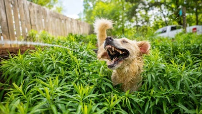 The funniest pet photos of 2021