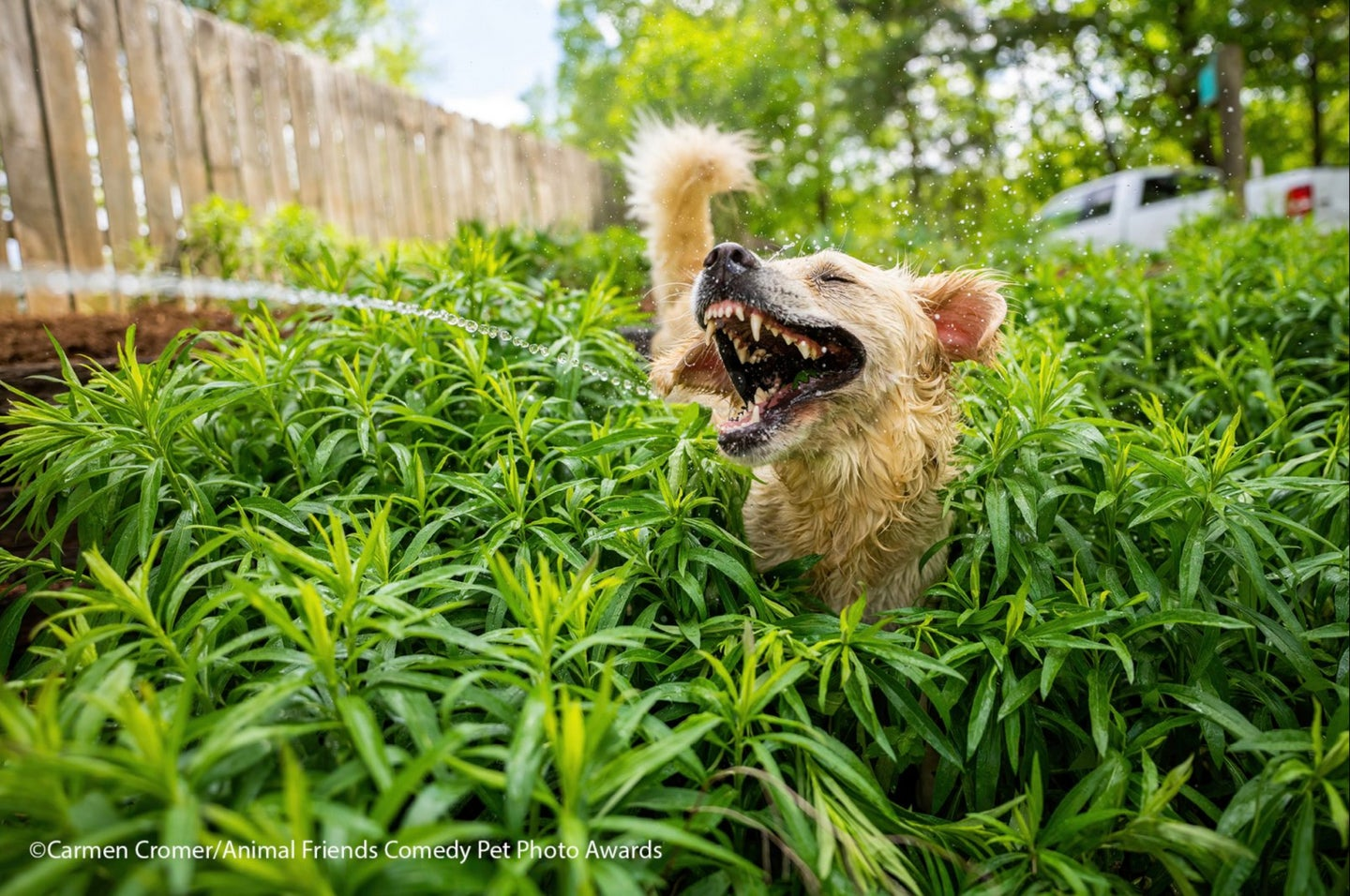 An entry from the 2021 Animal Friends Comedy Pet Photo Awards